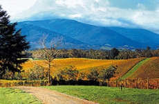 yarra valley scenery 269x175