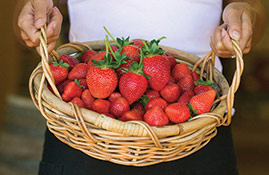 sunny ridge strawberry basket 269x175